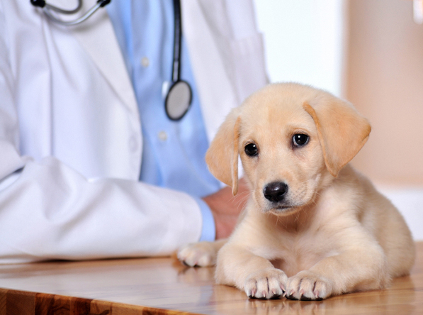 Beaumont, TX. Pet Clinic Insurance
